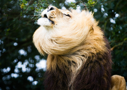 Big Cats Shoot-115.jpg | by Simon J Powell