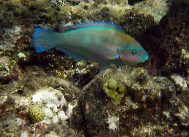 Virgin Islands Snorkeling Guide