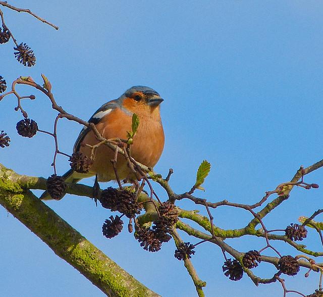 Oiseau de normandie j 39 ignore le nom de cet oiseau mais for Photo oiseau