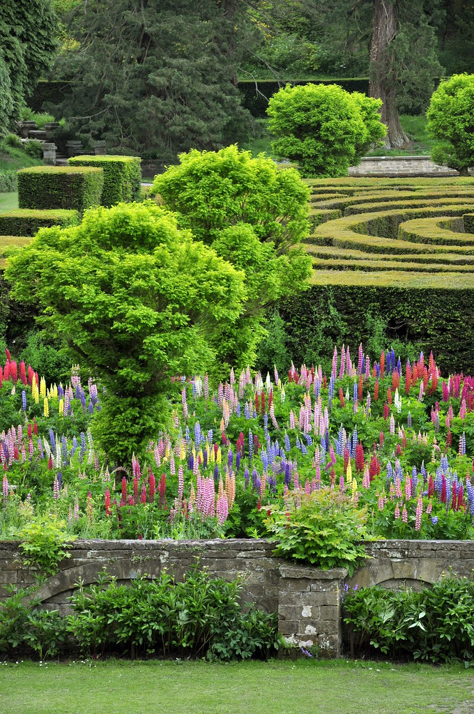 A maze and a lupin garden at chatsworth this part of for Jardin madison