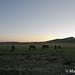 3M Horse Herding