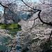 2012 Sakura