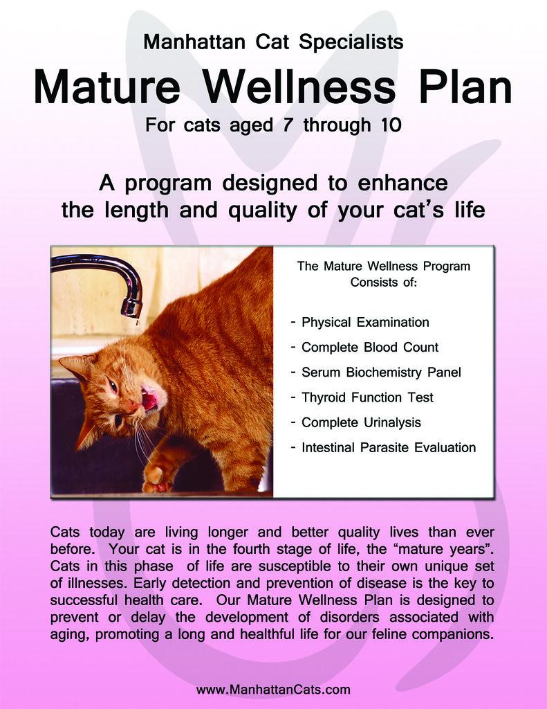 Pro Plan Cat Food Focus Uth Whitefish