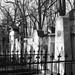 12Olšany Cemetery, Prague