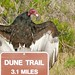 Beware! Those Who Dare To Enter The Dune Trail