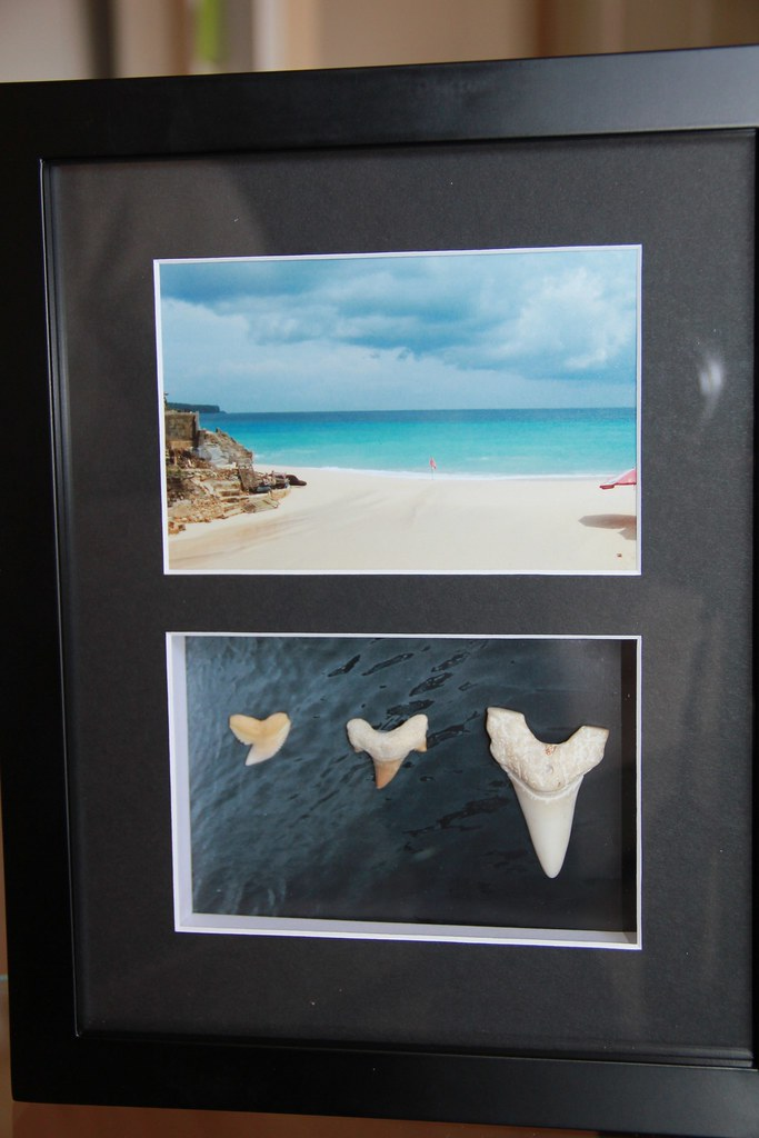 Shark teeth frame left to right tiger mako or morroccan