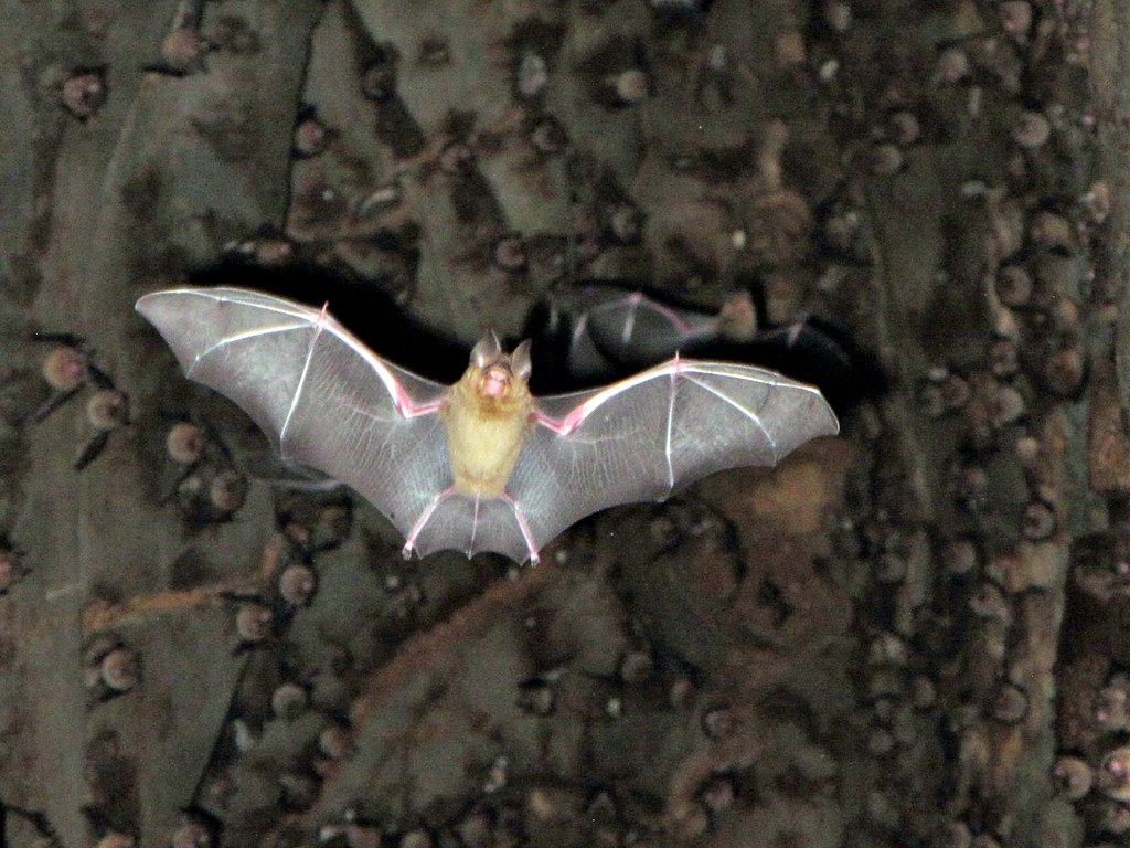 Bat Cave - Khao Yai National Park  Paco Alfonso  Flickr