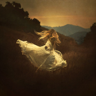the daydreamers | by brookeshaden
