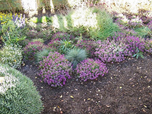 Jard n con plantas arom ticas jard n con plantas - Jardines con rosas ...