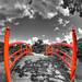 A selective bridge