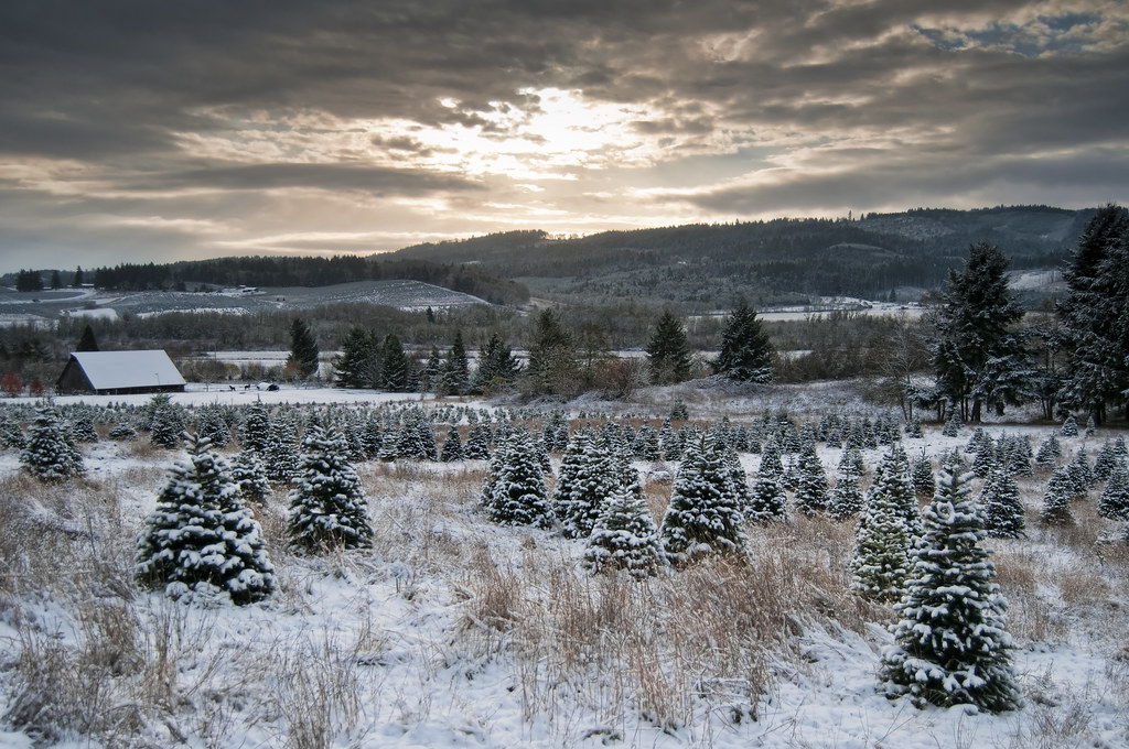 Christmas Tree Farm Jobs