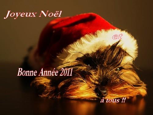 Joyeux No  235 l et Bonne Ann  233 e 2011   224  tous      by  Nikita151Joyeux Noel Et Bonne Annee