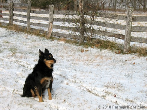 First Snow 11 | by Farmgirl Susan