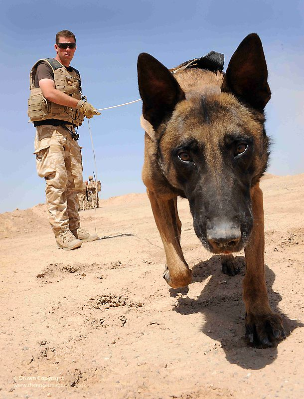 Army Dog Handler Army Dog Handler And Dog