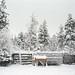 a huskey farm in Rovaniemi, Finland
