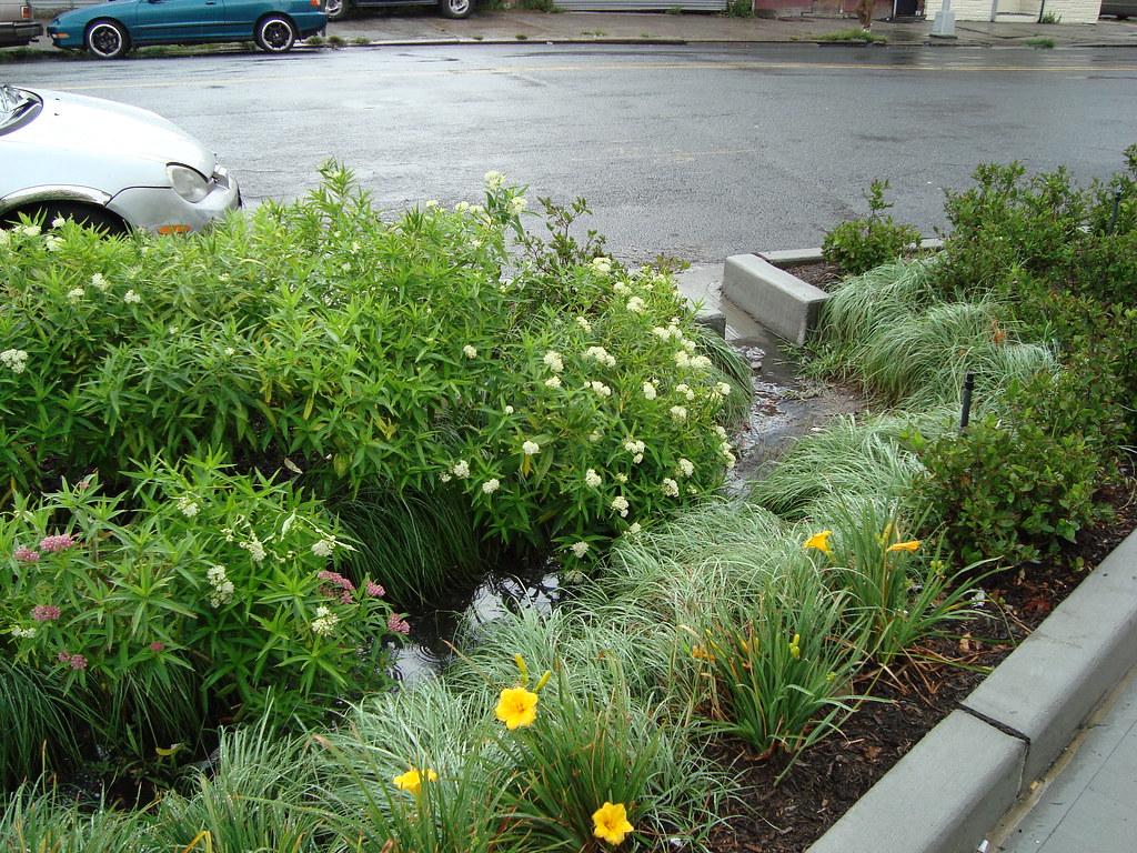 Pics Of Gardens Bioretention And Curb Cuts Street Bioretention At Church