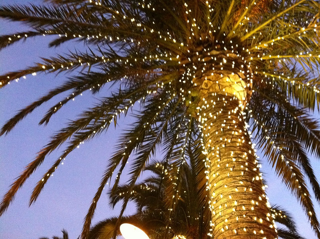 Palm tree with christmas lights flickr photo sharing