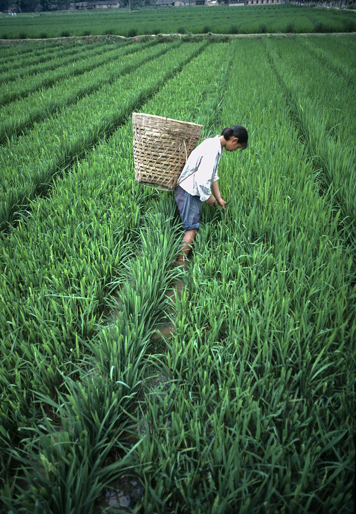 agriculture in indonesia essay Agriculture news - latest news direct from companies - read online or subscribe to feed or by email - press releases.