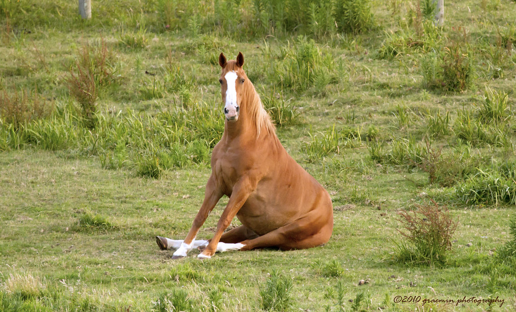 Dogs That Like Horses