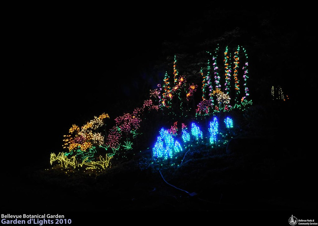 Lr 0698 Garden D 39 Lights At The Bellevue Botanical Garden Flickr