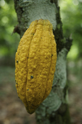 A cocoa farm | by World Bank Photo Collection
