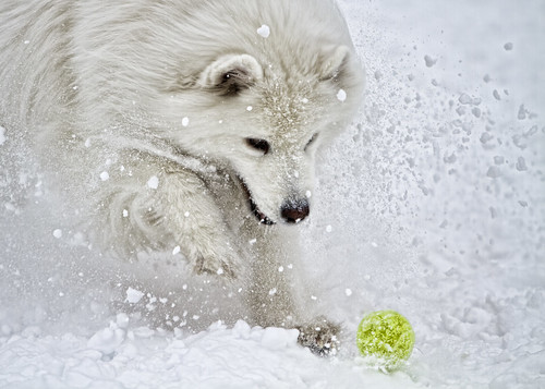 Cici + Ball + Snow Explosion | by bsteinfeld