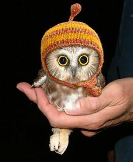 Owl with a hood | by FeelGood Drag