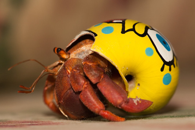 Hermit Crab On A Spongebob Shell | Flickr - Photo Sharing!