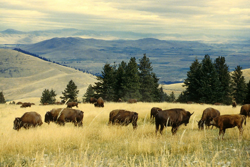 National Bison Range scenic2 | by USFWS Headquarters