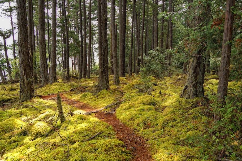 Douglas-fir Forest on San Juan Island   Joe Rocchio   Flickr  Douglas Fir Forest
