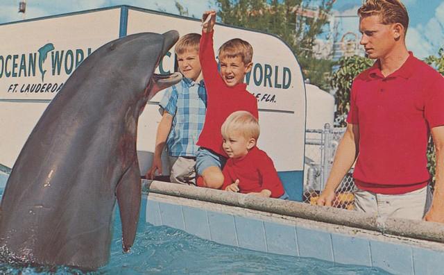 Ocean World Ft Lauderdale Florida Flickr Photo