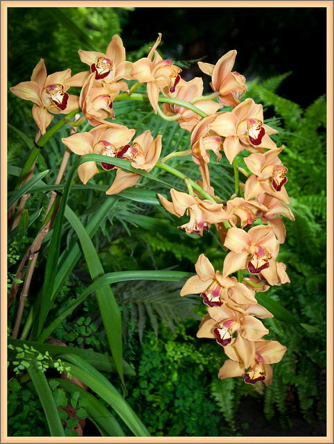 New Botanical Garden Orchid Show March 19 2011 By Photo Gem Flickr Photo Sharing
