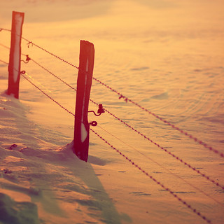 Sunset Fence [Explored] | by Cary Crusiau