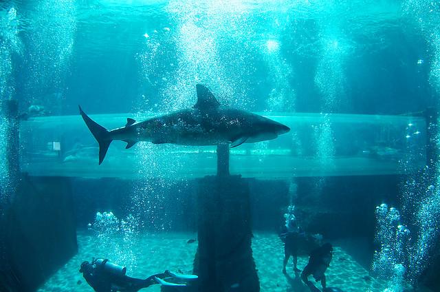 L Atlantis Paradise Island Aux Bahamas Respire Le Luxe