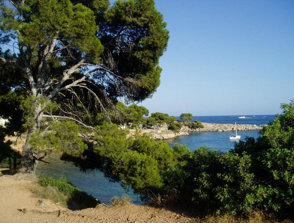Paisaje mediterraneo bosque perenne el clima for Arboles de hoja perenne para clima mediterraneo