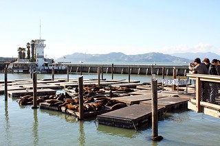 Sea Lions at Fisherman's Wharf | by Far Out City