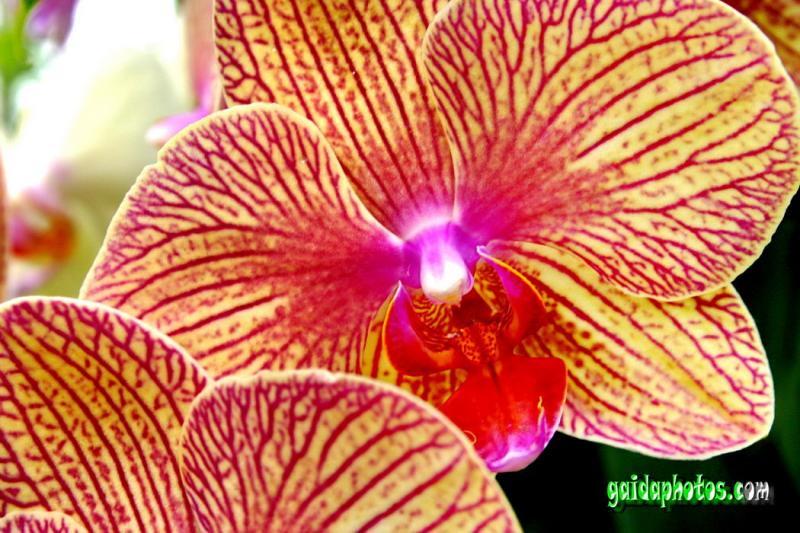 sag es mit orchideen valentinstag sag es mit blumen. Black Bedroom Furniture Sets. Home Design Ideas