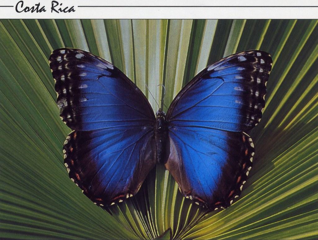 rainforest butterfly wallpaper - photo #12