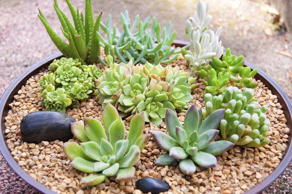 Succulent Dish Garden Donna Selph Flickr