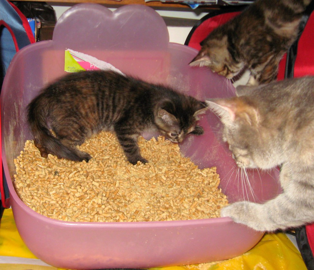 Training Kittens To Be Ok With Dogs
