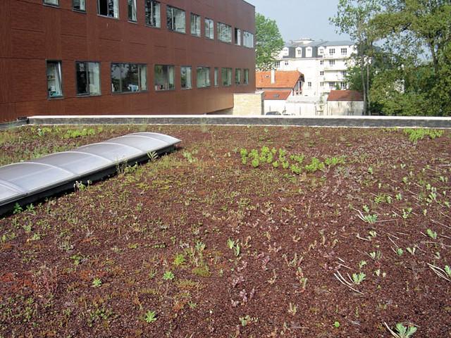 Toiture terrasse v g talis e ttv flickr photo sharing - Toiture terrasse vegetalisee ...