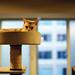 Exploring the Feline Psyche