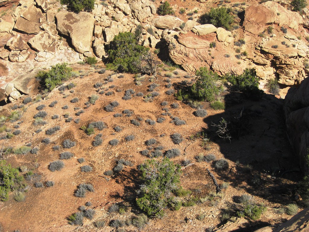 "microphytic soil crusts and desert ecosystems essay Search for more papers we define this kind of soil crust as ""litter and can provide a foundation for future work on litter crusts in desert ecosystems."