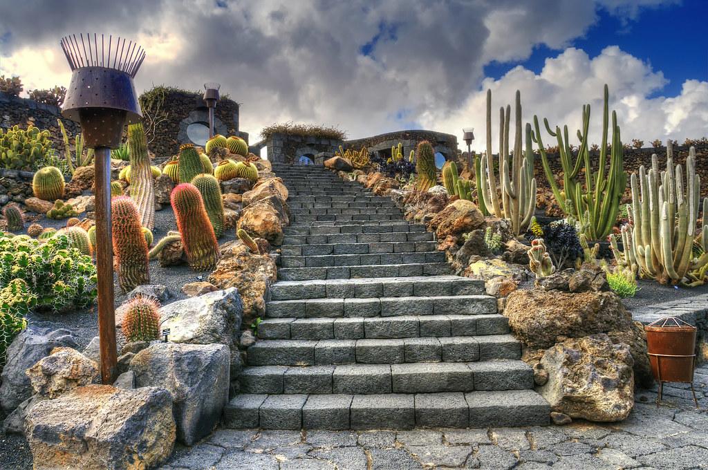Jardin de cactus stairway guatiza for Artichaut plante grasse