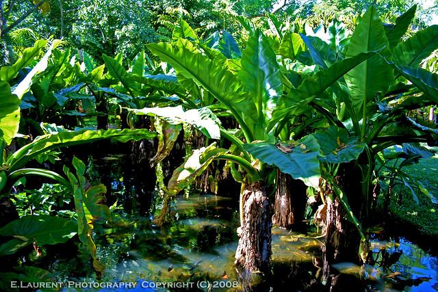Jardin tropical explore e laurent 39 s photos on flickr e for Jardin tropical