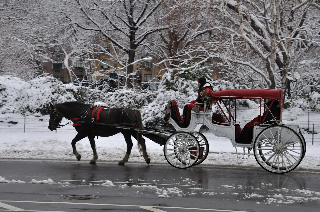 Central Park Nyc Carriage Rides Carriage Ride Through Central