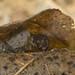 caddisfly larvae 3