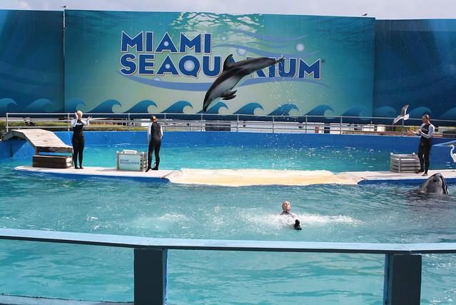 miami seaquarium flickr photo