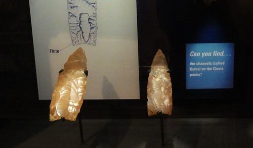 Image shows two light brown Clovis points. The channel chipped in the bottom center is clearly visible on both. The sign behind them has a drawing showing the flute so that modern viewers know what to look for.