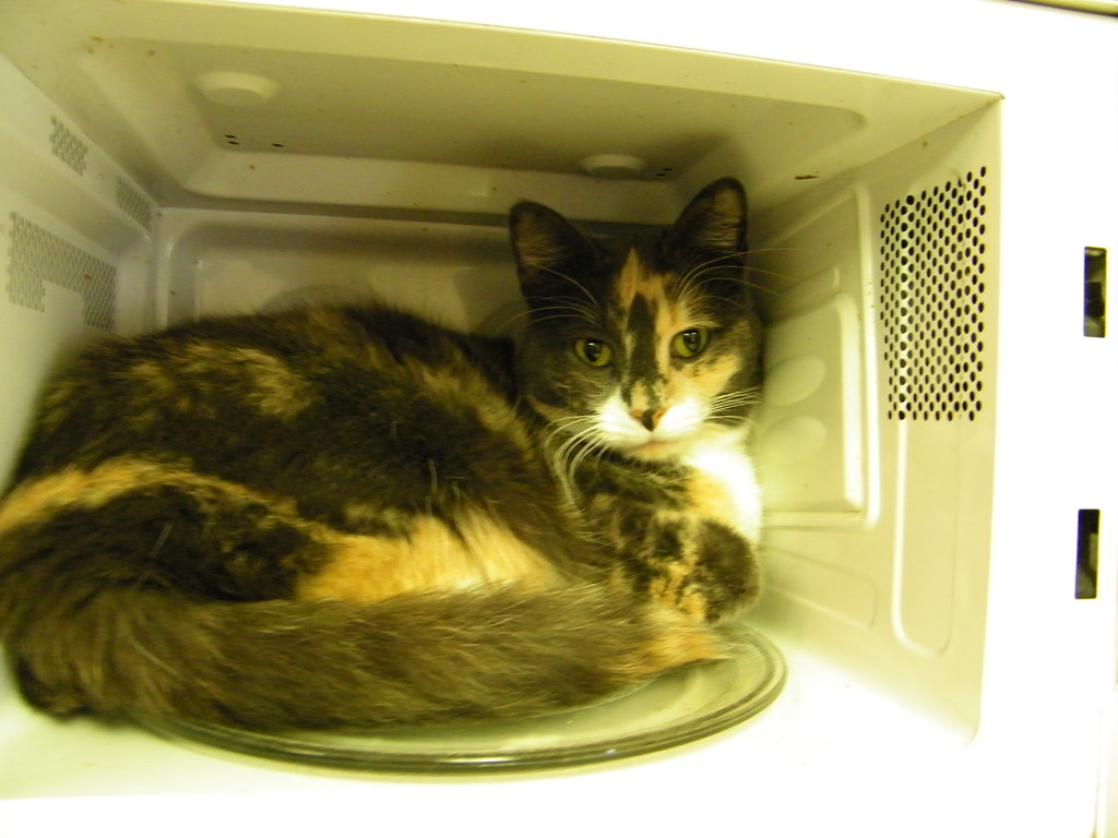 247365977 february 13 2011 � clemy in the microwave